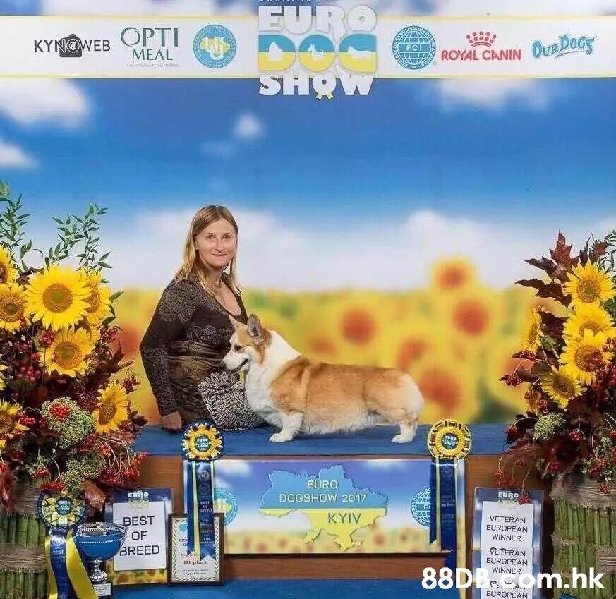 EURO KYNOWEB OPTI MEAL FCI ROYAL CANIN OURDOCS SHO w EURO EURO EURO DOGSHOW 2017 wA KYIV VETERAN EUROPEAN WINNER BEST attm OF BREED ETERAN EUROPEAN WINNER ST i plten 88D8om.hk EUROPEAN,Canidae,Dog,Companion dog,