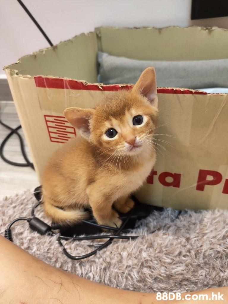 ra P .hk  Cat,Mammal,Vertebrate,Small to medium-sized cats,Felidae