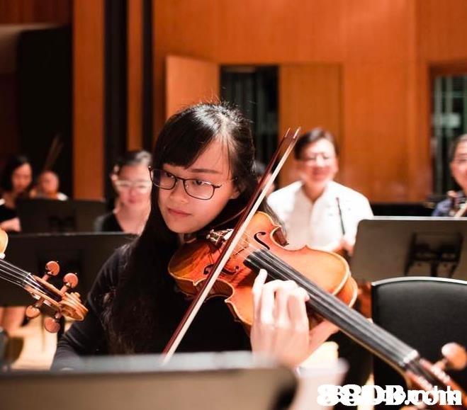 88DBnoih  Music,Viola,Musical instrument,Violist,Violin