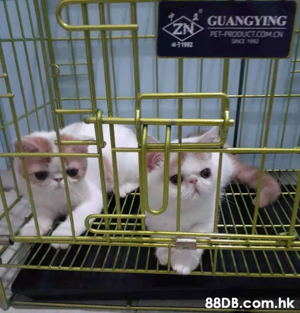 ZN GUANGYING PET-PRODUCT.COM.CN SACE 1992 31992 .hk  Cage,Animal shelter,Cat,Felidae,Small to medium-sized cats