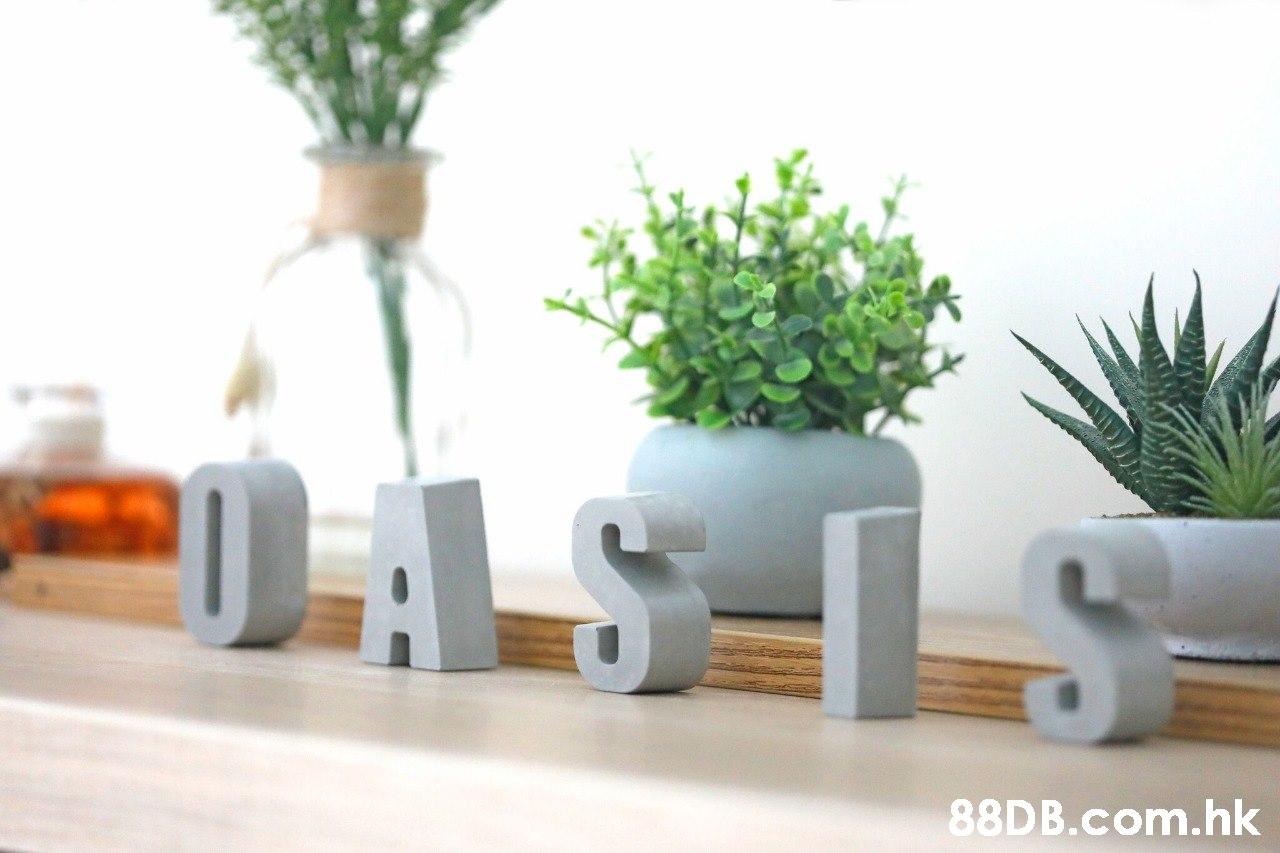 LSLS .hk  Flowerpot,Houseplant,Product,Vase,Room