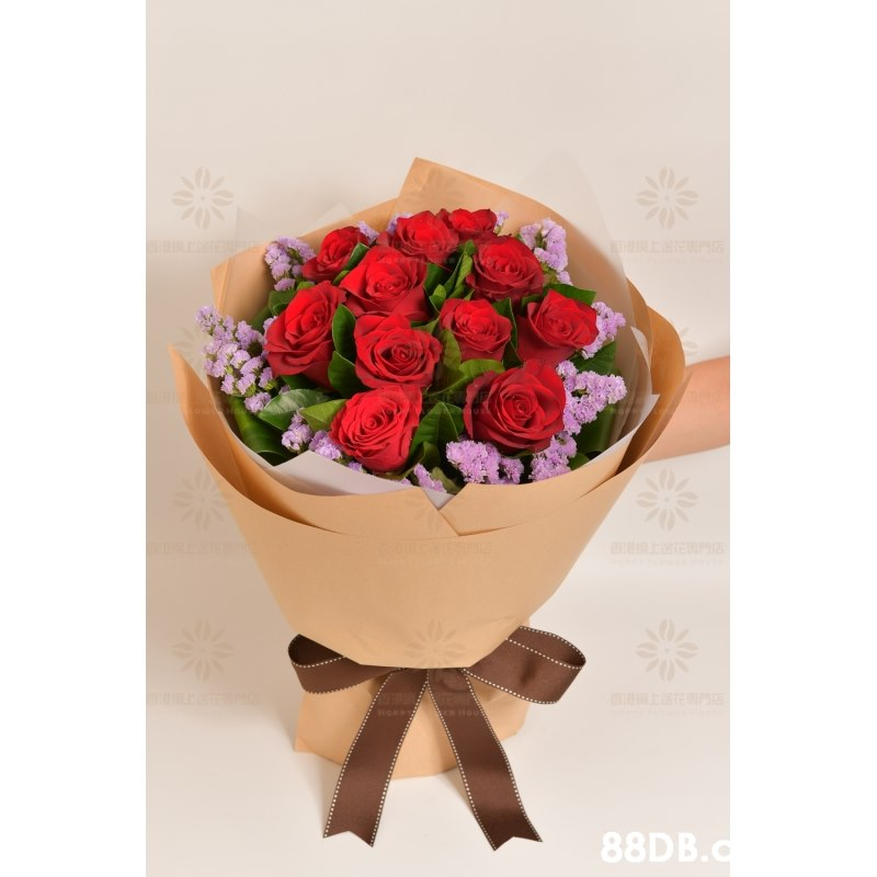 88DB.c  Flower,Bouquet,Rose,Garden roses,Flowerpot