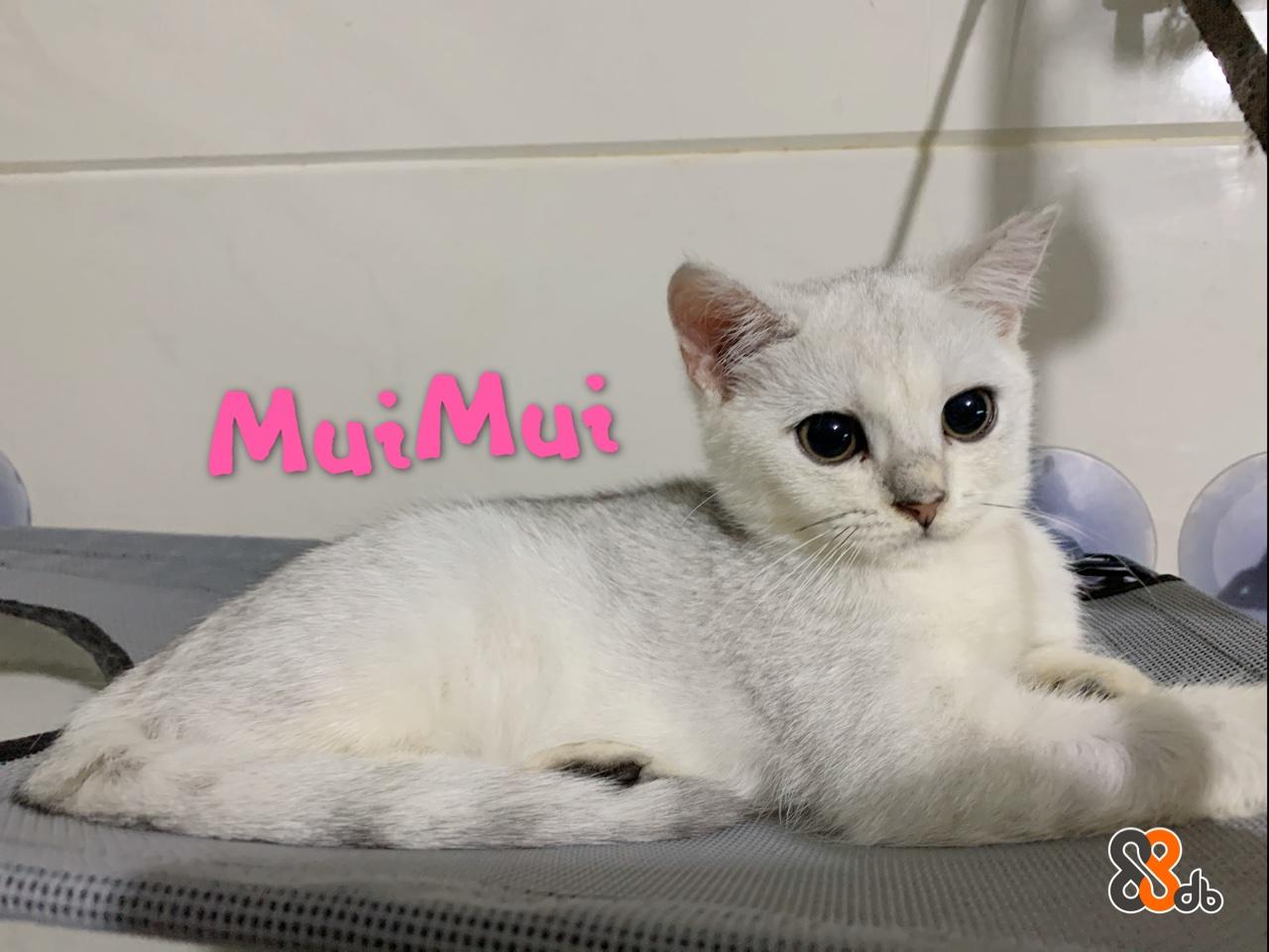 8ob  Cat,Mammal,Vertebrate,Small to medium-sized cats,Felidae