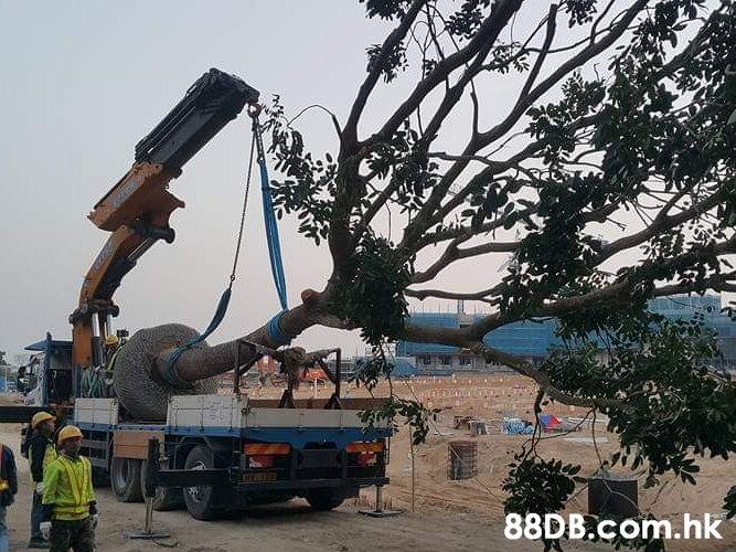 .hk  Tree,Transport,Crane,Woody plant,Construction equipment