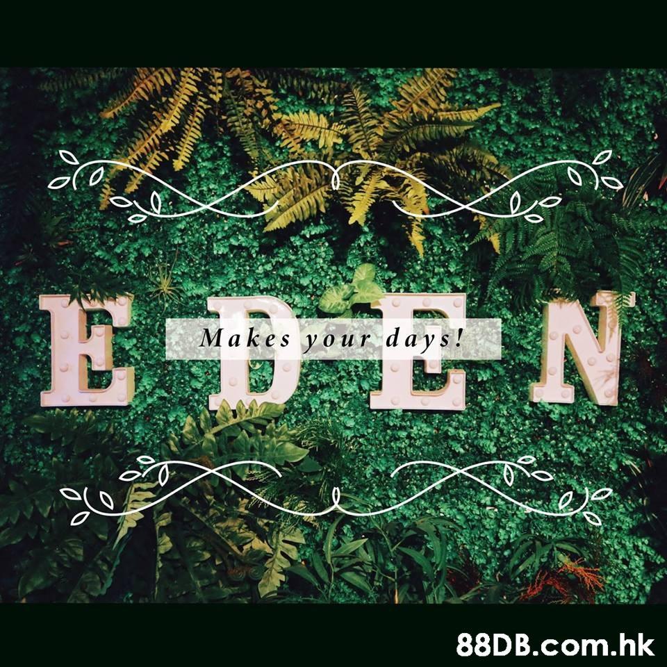 EDEN Makes your days! .hk  Green,Text,Font,Graphic design,Leaf