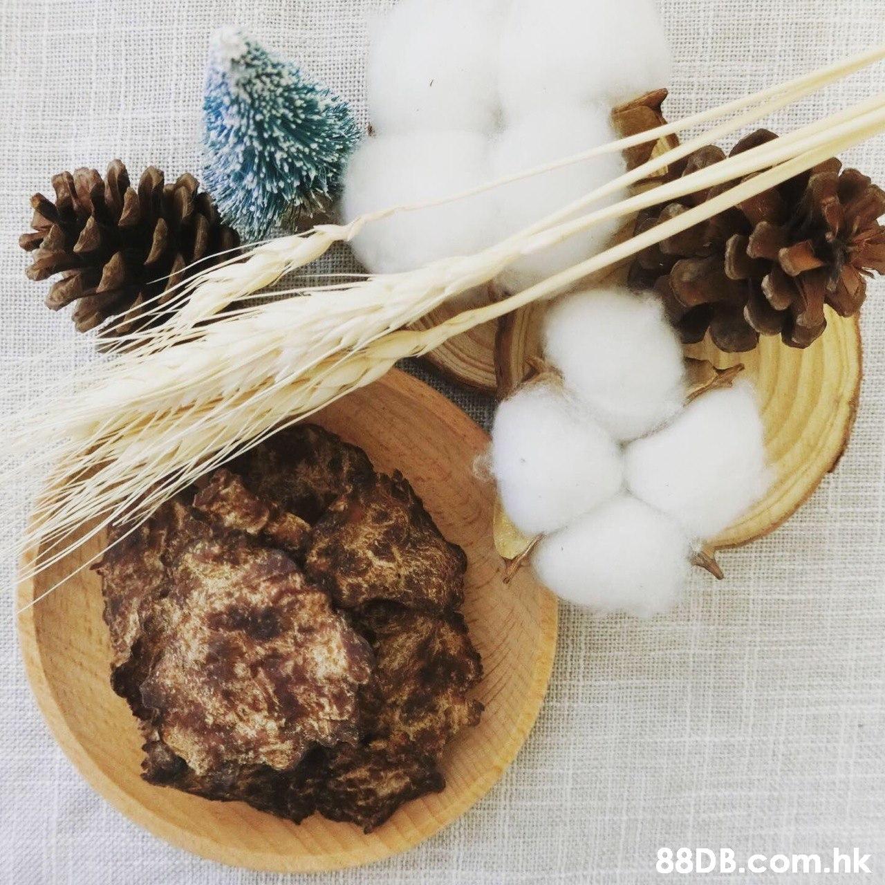 .hk  Tree,Food,