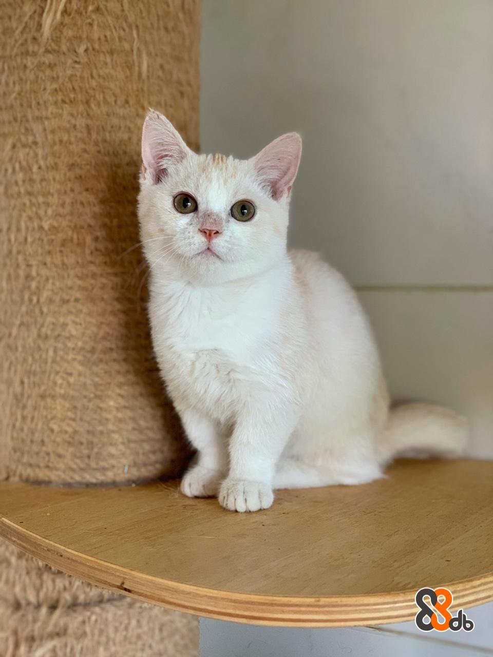 Cat,Mammal,Small to medium-sized cats,Felidae,Carnivore