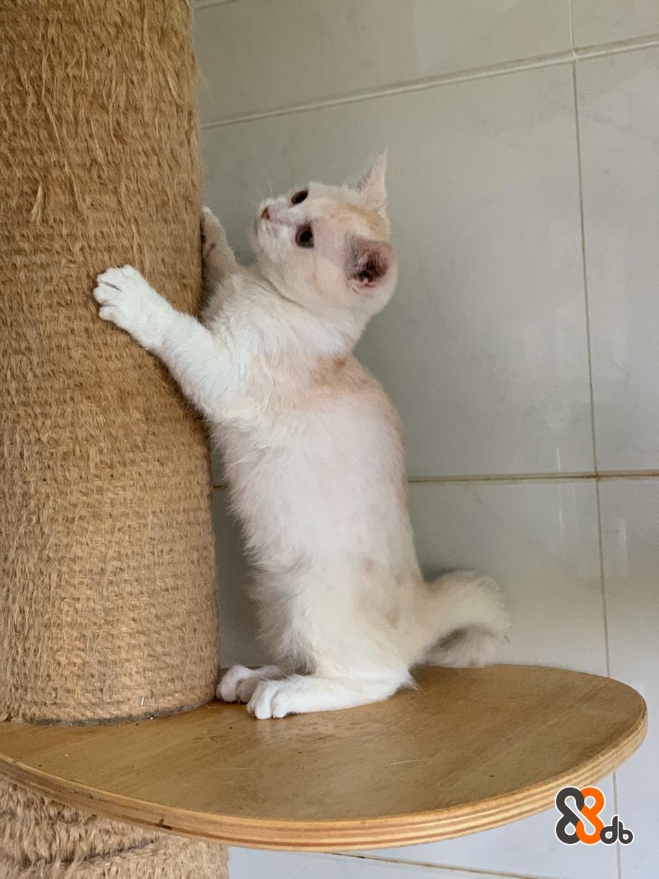 Cat,Mammal,Small to medium-sized cats,Felidae,European shorthair