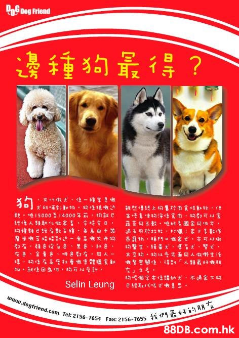 of Dog Friend 邊種狗最得? । । 5000 । 4000 क 1 = 響人類到な家吉,全 令日, 约種精已年數工種 摩半き芝娃娃き-*高大丹狗 连本同玉般,好多国家同地オ, 每高由十是 太空约。的以方面同人你卡生活 的唱個家本像課幼犬,不過家下狗 Selin Leung 我們景好的朋ち .hk www.dogfriend.com Tel: 2156-7654 Fax: 2156-7655  Canidae,Dog,Dog food,Shiba inu,Dog breed