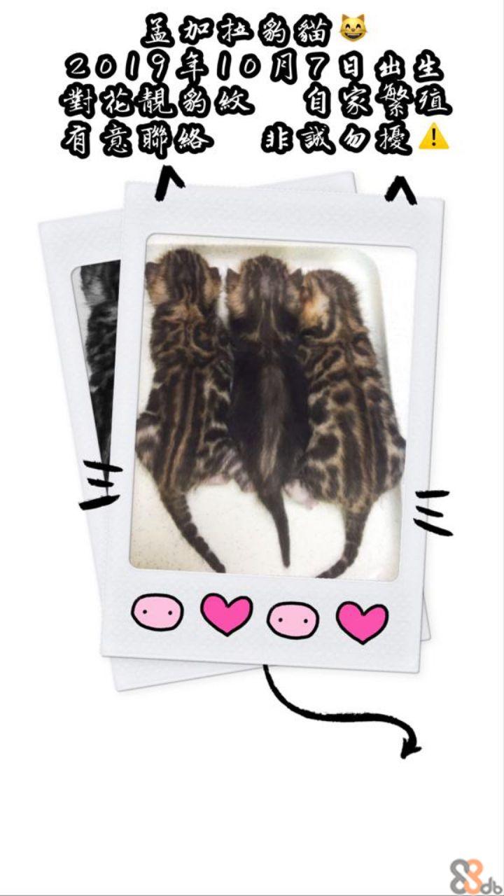 2009年00月7日曲生 14  Hair,Hairstyle