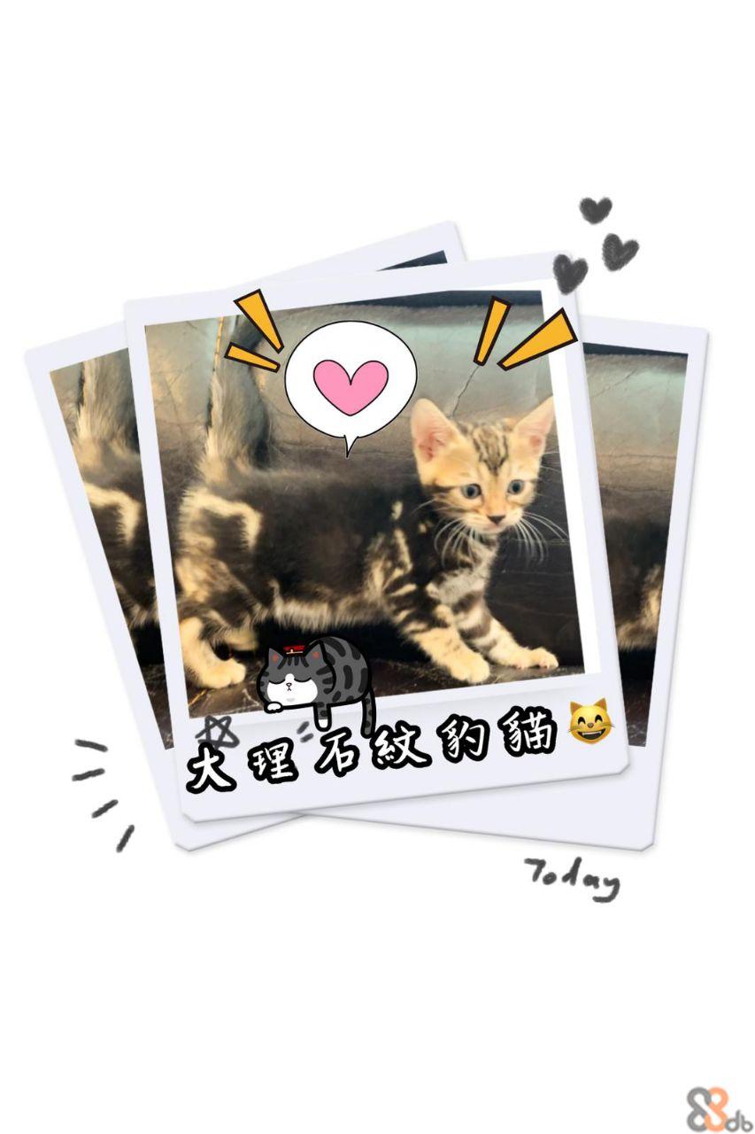 Today  Cat,Felidae,Kitten,