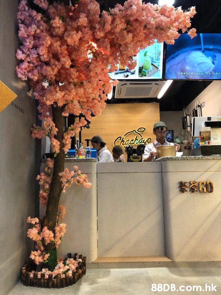 我們會因應每一個李師、產地,水果的 Chackaro KEGO .hk  Tree,Plant,Flower,Spring,Blossom