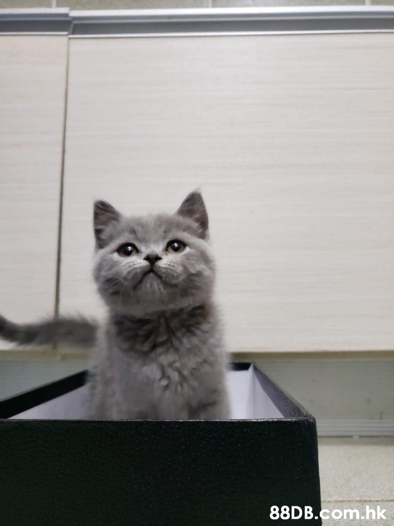 .hk  Cat,Vertebrate,Mammal,Small to medium-sized cats,Felidae